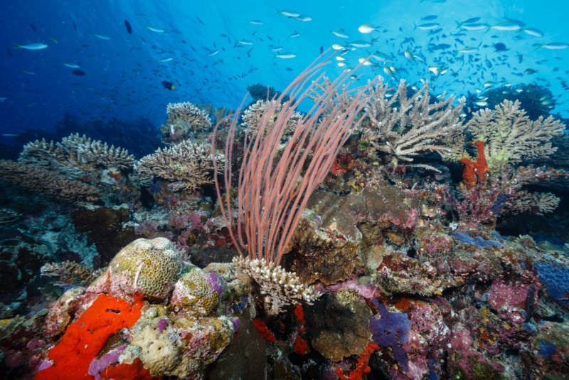 Reef Diving at Six Senses Laamu Resort, Maldives